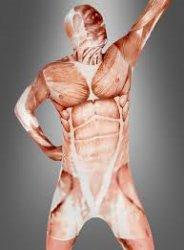 Ganzkörperanzug  Anatomie